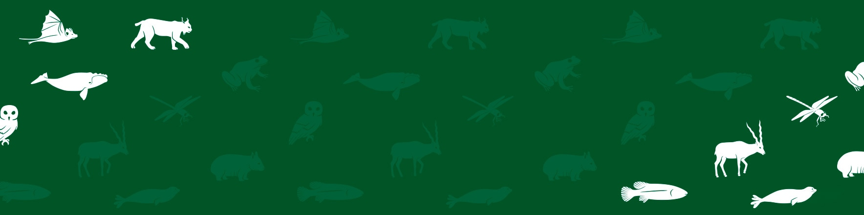 Lacoste x Save Our Species <br>3520 polos, sold out!</br>